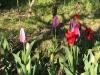 Thumbnail_image0_20200406084601
