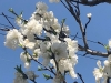 Thumbnail_image3_20200406084601