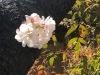 Thumbnail_image4_20200406084601