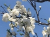 Thumbnail_image9_20200423085201